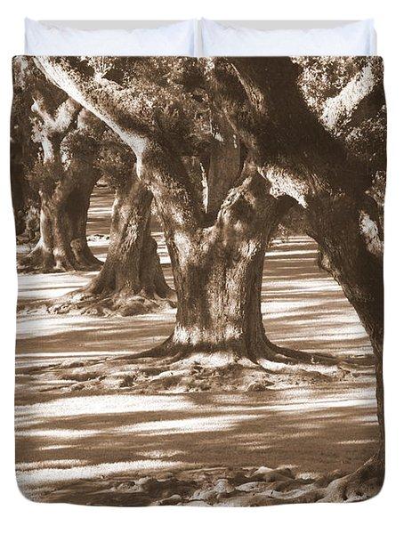 Southern Sunlight on Live Oaks Duvet Cover by Carol Groenen