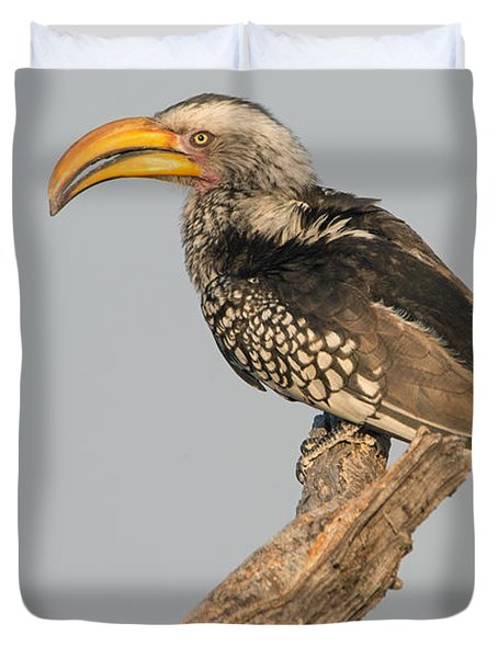 Southern Yellow-billed Hornbill Tockus Duvet Cover by Panoramic Images