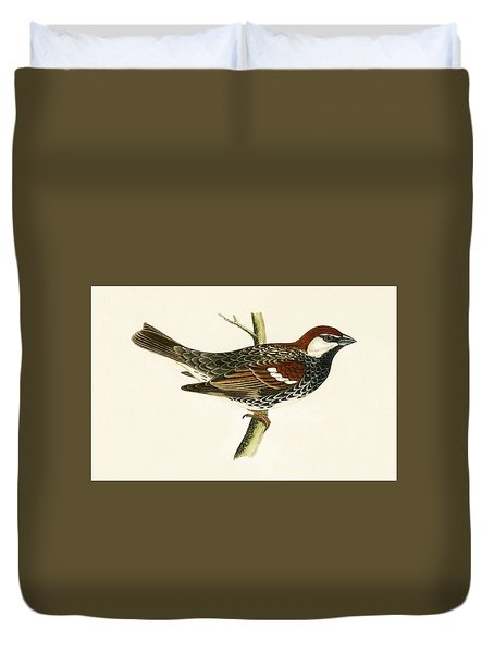 Spanish Sparrow Duvet Cover by English School