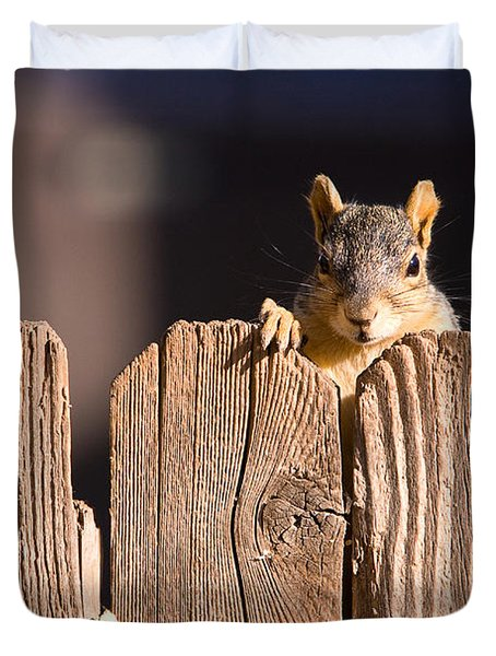 Squirrel On The Fence Duvet Cover by James BO  Insogna