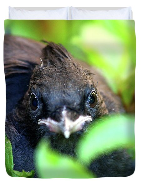 Stellers Jay Chick . 40D501 Duvet Cover by Wingsdomain Art and Photography