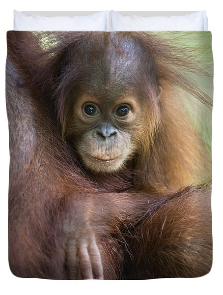 Sumatran Orangutan 9 Month Old Baby Duvet Cover by Suzi Eszterhas