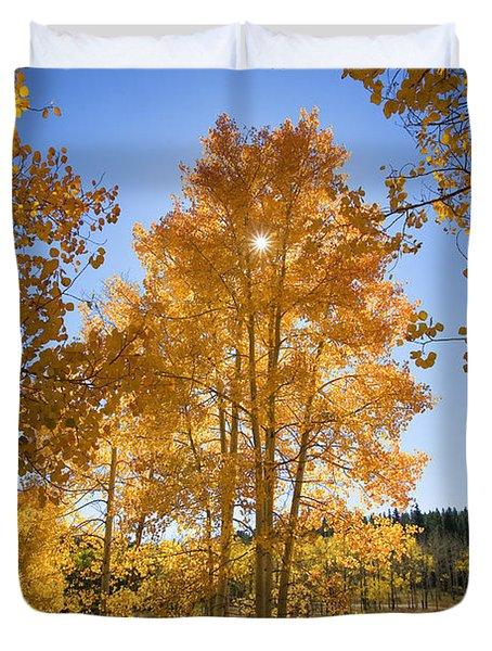 Sun Through Aspens Duvet Cover by Ron Dahlquist - Printscapes