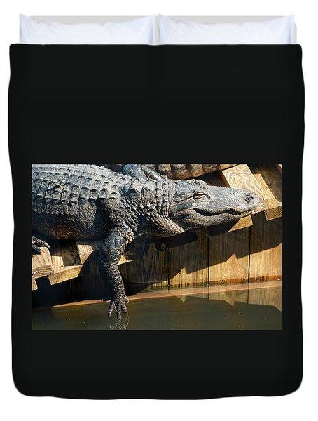 Sunbathing Gator Duvet Cover by Carolyn Marshall