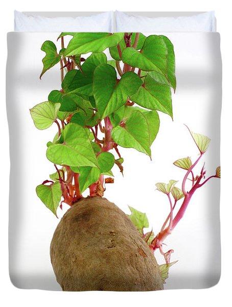 Sweet Potato Duvet Cover by Gaspar Avila