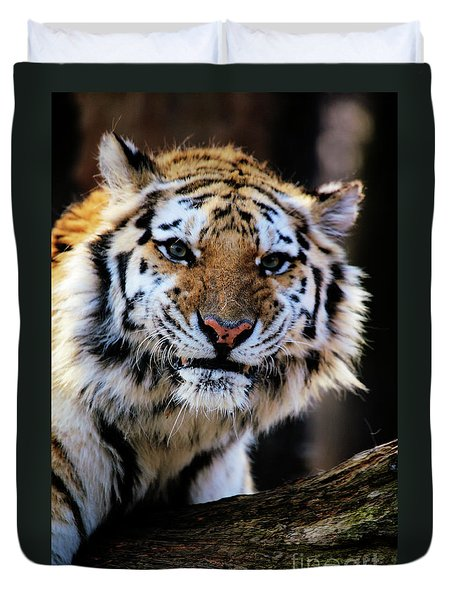 That Tiger Look Duvet Cover by Karol Livote