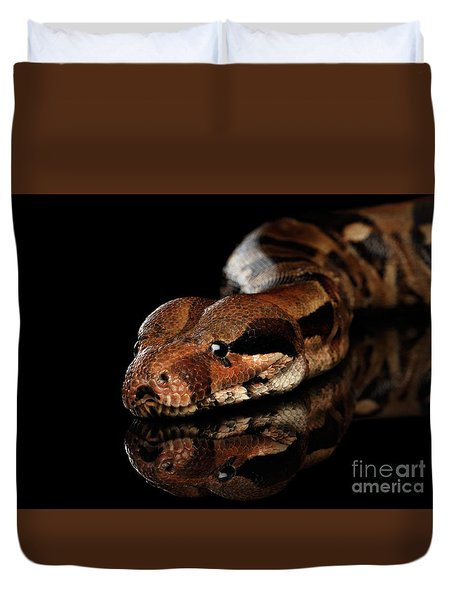 The Boa Constrictors, Isolated On Black Background Duvet Cover by Sergey Taran
