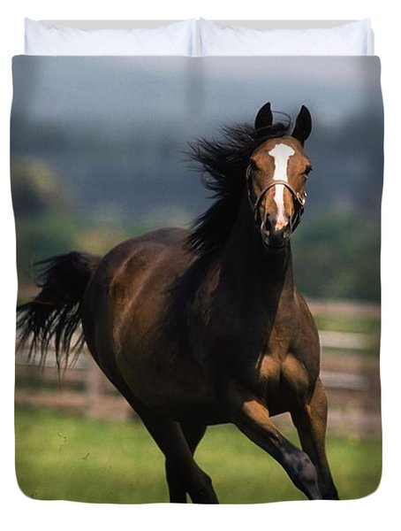 Thoroughbred Horses, Yearlings Duvet Cover by The Irish Image Collection