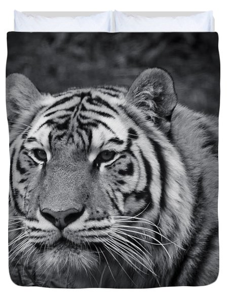 Tiger In The Grass Duvet Cover by Darcy Michaelchuk