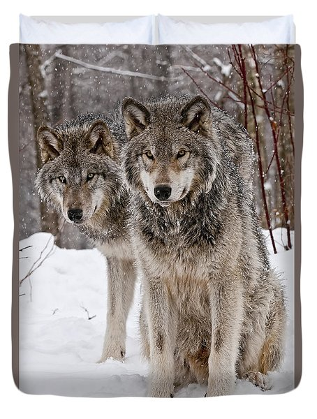 Timber Wolves In Winter Duvet Cover by Michael Cummings