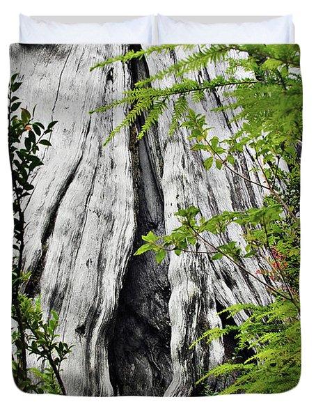Tree of Life - Duncan Memorial Big Western Red Cedar Duvet Cover by Christine Till