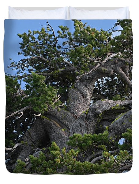 Twisted And Gnarled Bristlecone Pine Tree Trunk Above Crater Lake - Oregon Duvet Cover by Christine Till