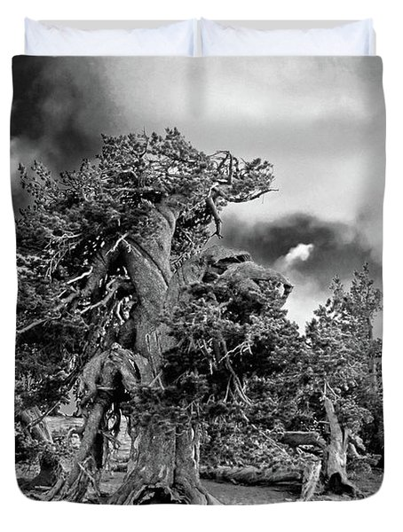 Twisted old Bristlecone Pine above Crater Lake - Oregon Duvet Cover by Christine Till