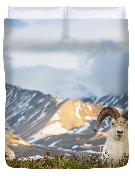 Two Adult Dall Sheep Rams Resting Duvet Cover by Michael Jones
