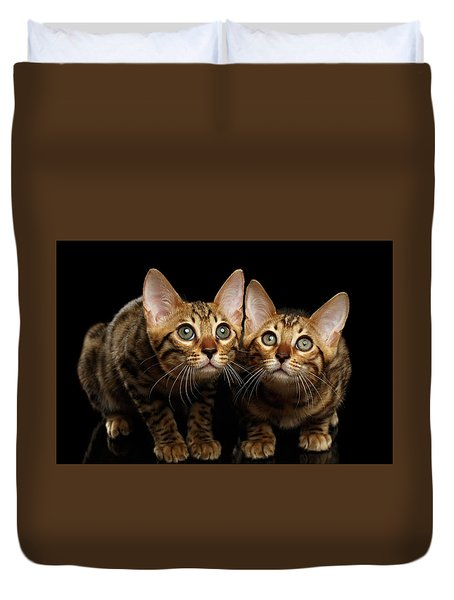 Two Bengal Kitty Looking In Camera On Black Duvet Cover by Sergey Taran