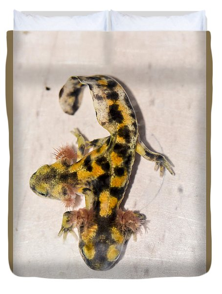 Two-headed Near Eastern Fire Salamande Duvet Cover by Shay Levy