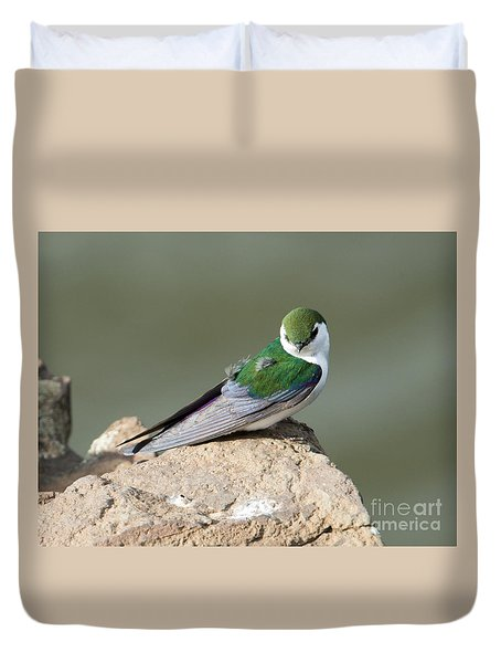 Violet-green Swallow Duvet Cover by Mike Dawson