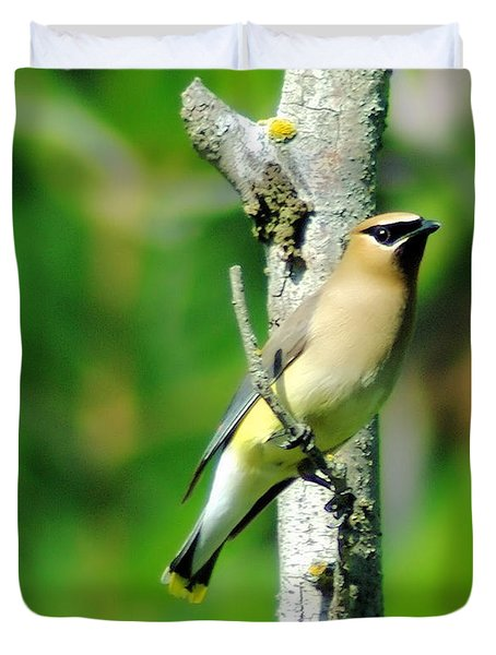 Wax Wing In A Small Branch  Duvet Cover by Jeff Swan