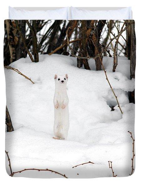 White Ermine Duvet Cover by Leland D Howard