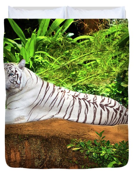White tiger Duvet Cover by MotHaiBaPhoto Prints