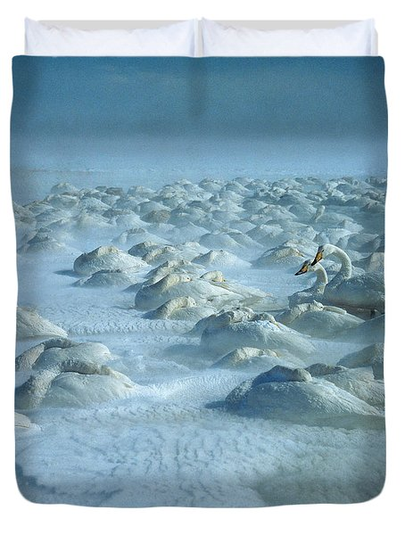 Whooper Swans In Snow Duvet Cover by Teiji Saga and Photo Researchers