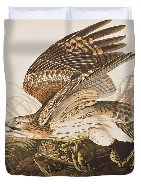 Winter Hawk Duvet Cover by John James Audubon