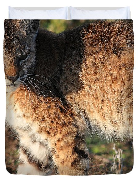 Young Bobcat 01 Duvet Cover by Wingsdomain Art and Photography