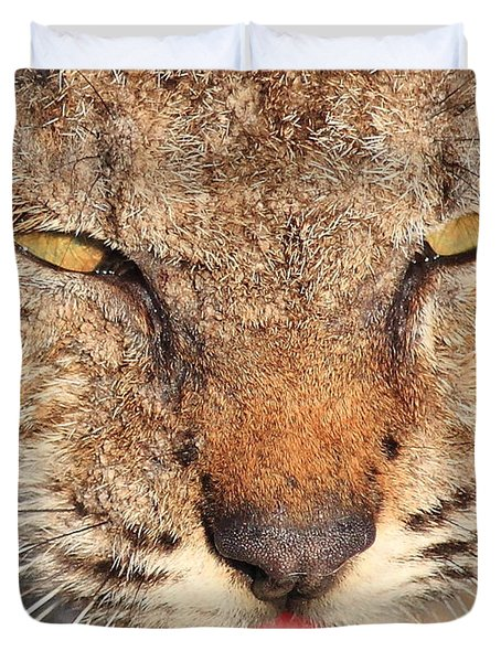 Young Bobcat Portrait 01 Duvet Cover by Wingsdomain Art and Photography