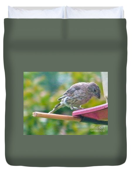 Young Crossbill Female  August  Indiana Duvet Cover by Rory Cubel