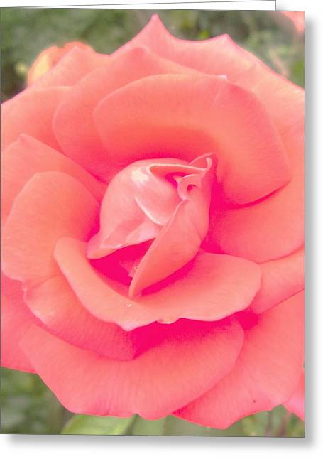 Photos Of Coral Greeting Cards -       Raffios Coral Rose Greeting Card by Trudy Brodkin Storace