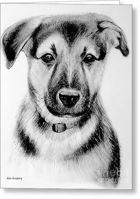Puppies Drawings Greeting Cards - # 1 German Shepherd puppy Greeting Card by Alan Armstrong