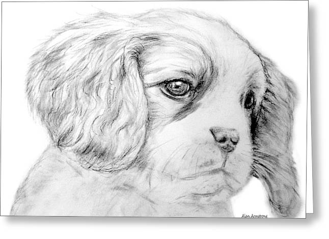 Spaniel Drawings Greeting Cards - # 3 Cocker Spaniel puppy Greeting Card by Alan Armstrong