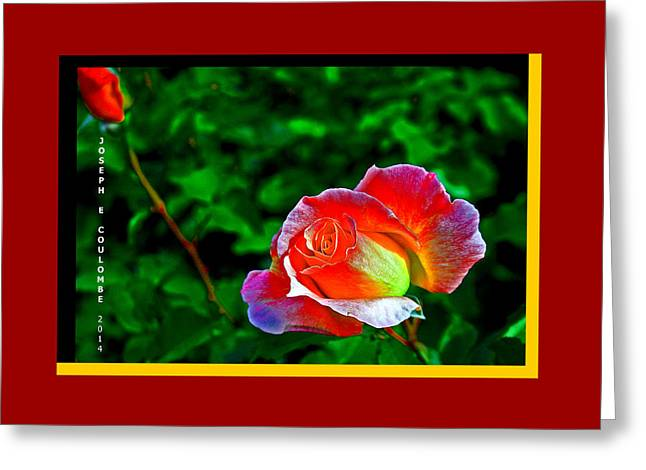 Visual Quality Digital Greeting Cards -  A Blended Rose Greeting Card by Joseph Coulombe