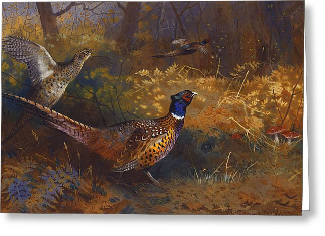 Gamebird Greeting Cards -  A Cock and Hen Pheasant at the Edge of a Wood Greeting Card by Archibald Thorburn