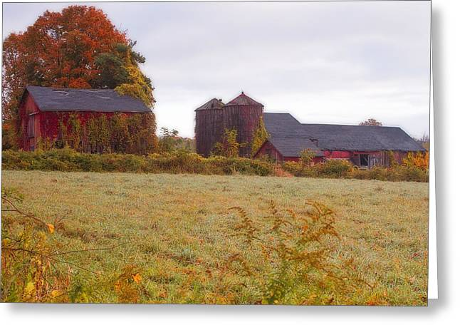 Bittersweet Greeting Cards -  Abandoned Connecticut Farm  Greeting Card by John Vose