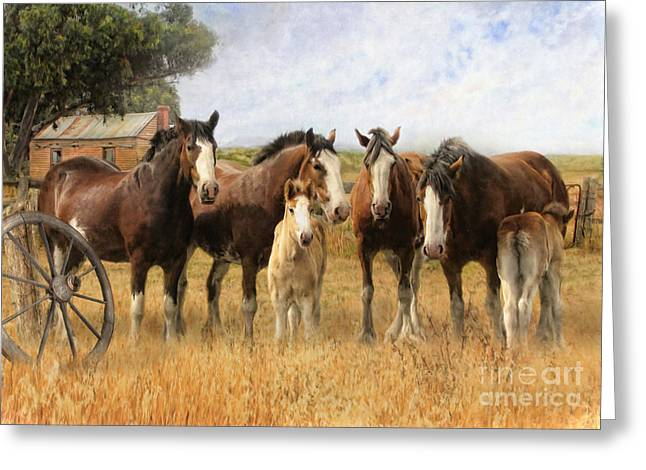 Clydesdale Greeting Cards -  Always and Forever Greeting Card by Trudi Simmonds