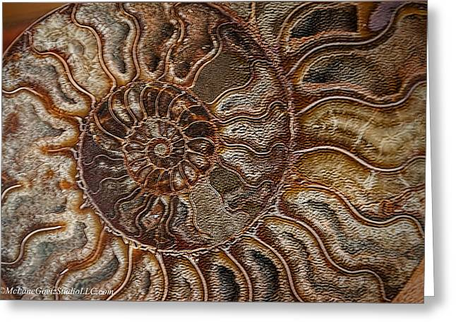 Shell Texture Greeting Cards -  Ammonite Fossils Greeting Card by LeeAnn McLaneGoetz McLaneGoetzStudioLLCcom
