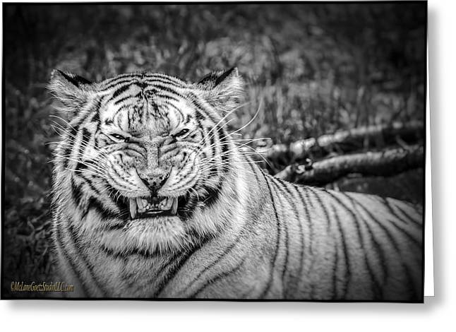 Growling Greeting Cards -  Amur Tiger Black and White Greeting Card by LeeAnn McLaneGoetz McLaneGoetzStudioLLCcom