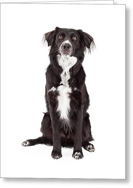 Obedience Greeting Cards -  Attentive Border Collie Mix Breed Dog Sitting Greeting Card by Susan  Schmitz