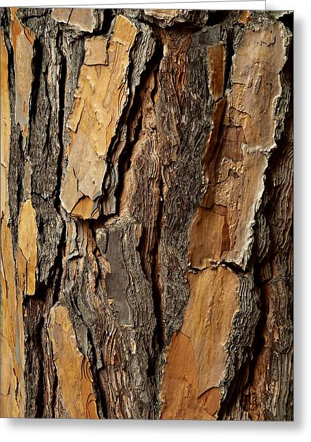 Brown Photographs Greeting Cards -  Bark On Tree Greeting Card by Xavier Cardell