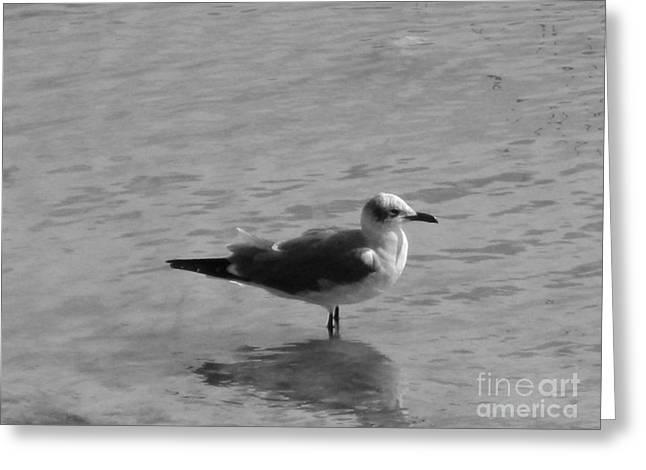 Nice Greeting Cards -  Bird. Grey photo  Greeting Card by Oksana Semenchenko
