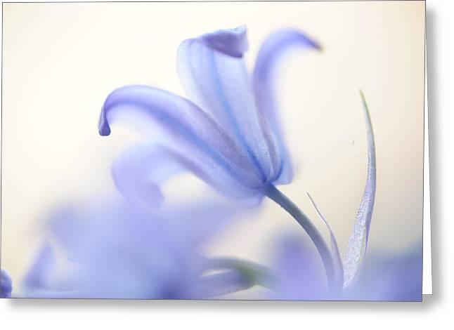 Blue Light. The Wild Hyacinth Greeting Card by Jenny Rainbow