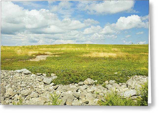 Blueberry Barrens Greeting Cards -  Blueberry Field With Blue Sky And Clouds In Maine Greeting Card by Keith Webber Jr