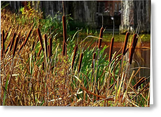 Buggy Whip Greeting Cards -  Bulrushes at Coalbrookdale Greeting Card by Paul Williams