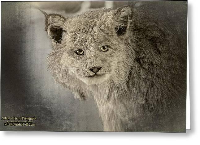 Lynx Rufus Greeting Cards -  Canadian lynx Greeting Card by LeeAnn McLaneGoetz McLaneGoetzStudioLLCcom