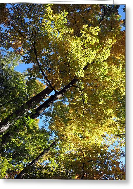 Haut Mixed Media Greeting Cards -  Canadian Wild Tall Trees Fall Season nature natural beautiful pleasing scenes     Greeting Card by Navin Joshi