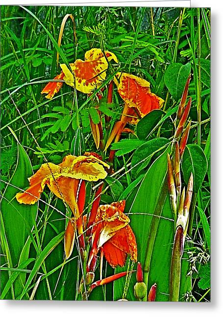 Canna Digital Art Greeting Cards -  Canna Lily in Tachilek-Myanmar Greeting Card by Ruth Hager