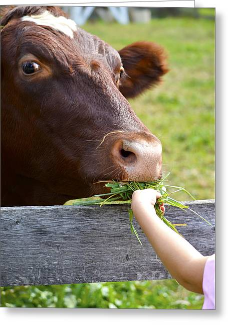 Fall Grass Greeting Cards -  Childs Helping Hand Greeting Card by Julie Palencia