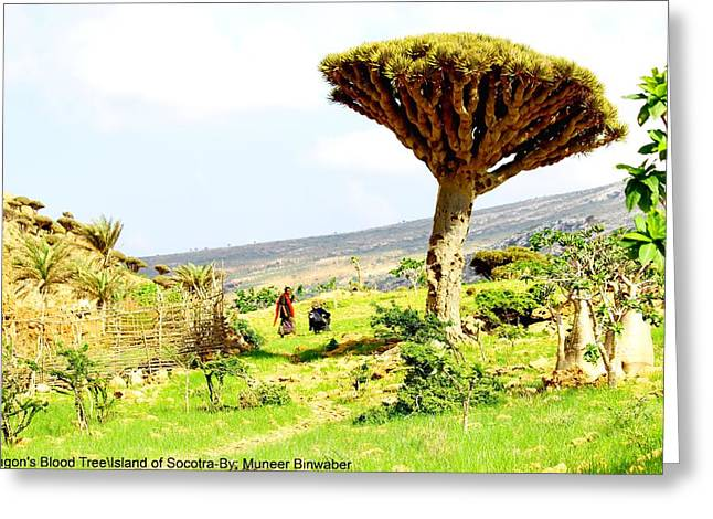 """strange Trees"" Greeting Cards -  Dragons Blood Tree 1 Greeting Card by Muneer Binwaber"