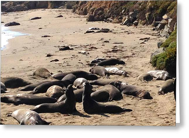 Elephant Seals Greeting Cards -  Elephant Seals Conversation  Greeting Card by Beth Saffer